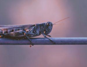 Owasso Pest Control